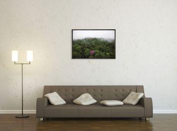 Ebène rose, Guyane