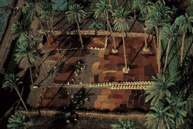 Séchage de dattes, Egypte
