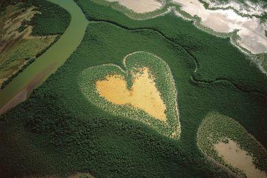 Mangrove du Coeur de Voh, Nouvelle-Calédonie