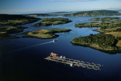 Salmon farm in the Chauques Islands, Chile