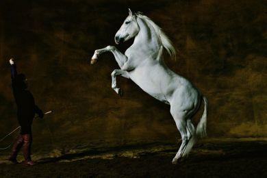 Cheval Pure Race Espagnole, Photo d'Art