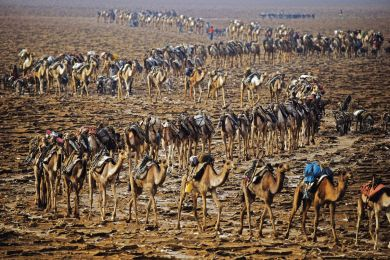 Camel caravan, Ethiopia