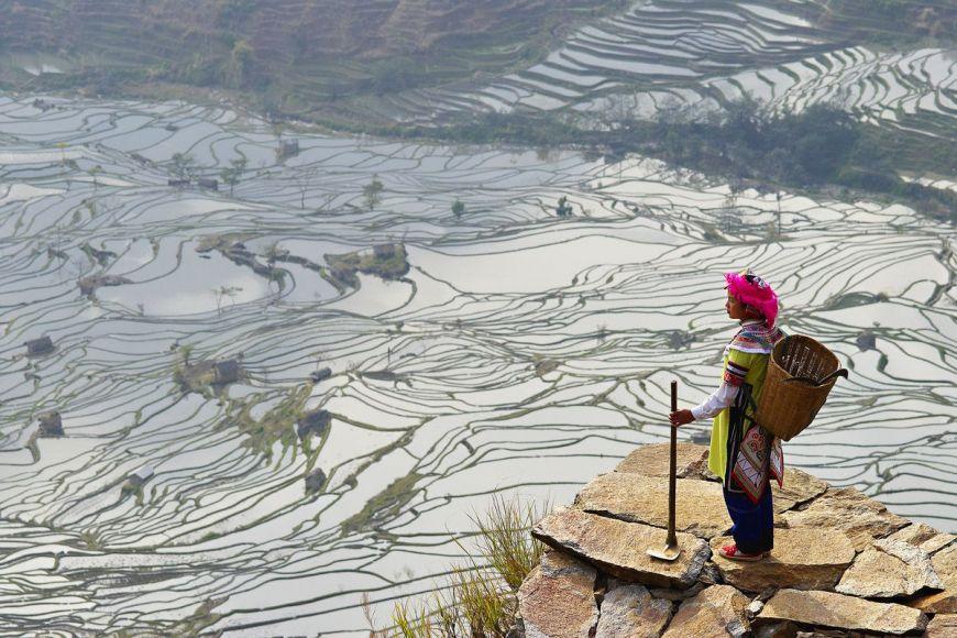 Rizières, Yunnan, Chine