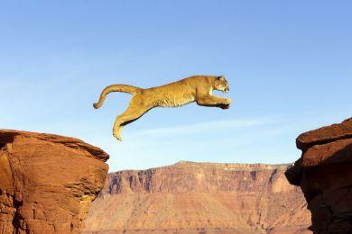 Cougar, Utah, United States