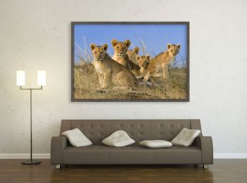 Kenya, lion cubs