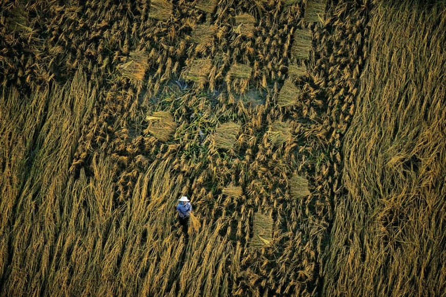Agriculture, Phitsanulok, Thailande