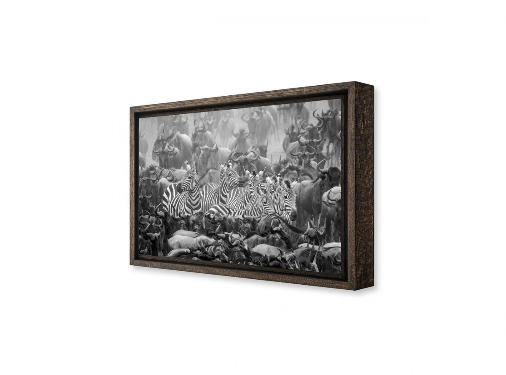 photographie d 39 art de z bres et de gnous au kenya en noir et blanc. Black Bedroom Furniture Sets. Home Design Ideas
