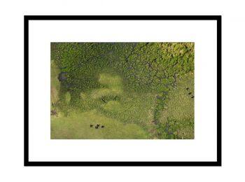 Kenya, buffles dans le Masai Mara