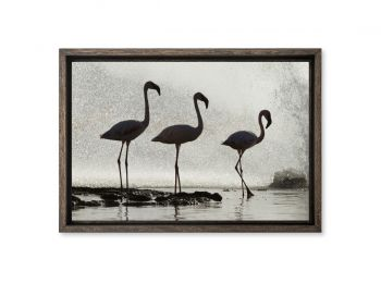 Kenya, lesser flamingo, Borogia