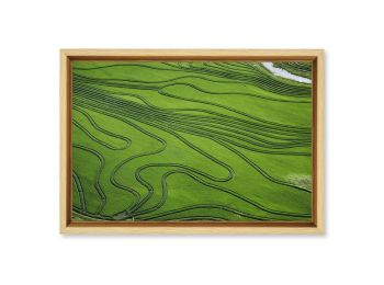 Uruguay, rice field