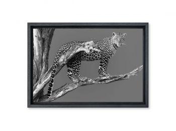 Kenya, femelle léopard