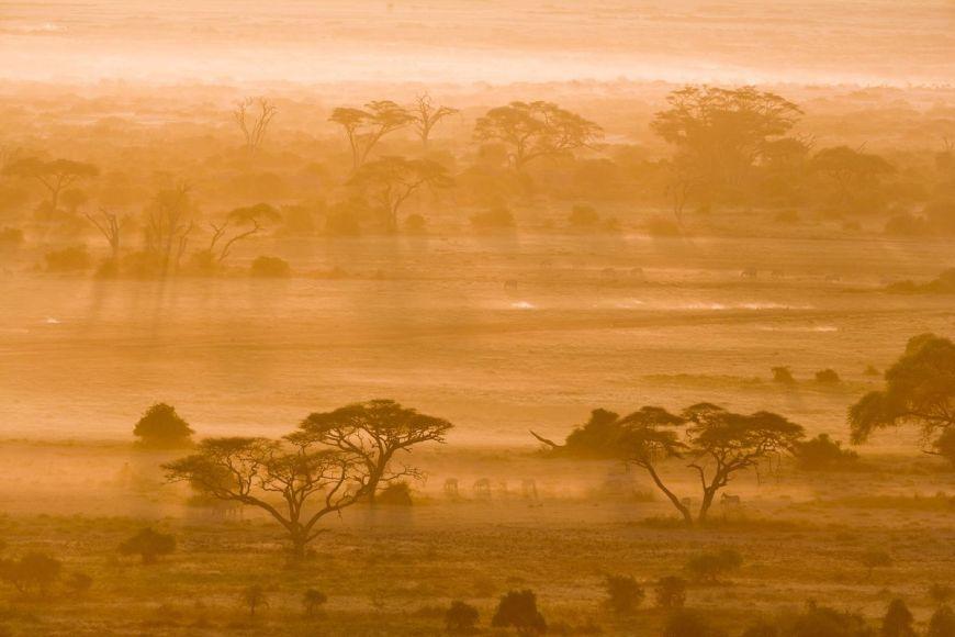 Kenya, zebra in Amboseli