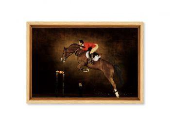 Selle Français stallion  Hors la loi II