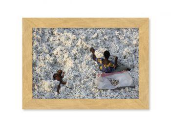 Récolte du coton, Burkina Faso