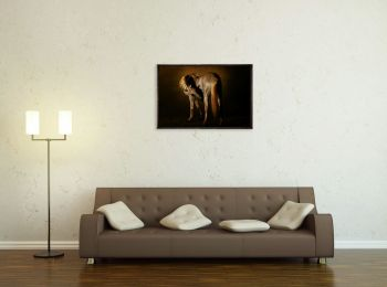 Lipizzan stallion