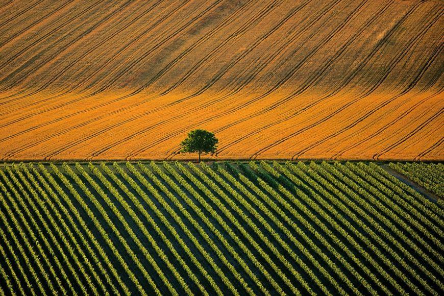 Paysage agricole à Cognac, France