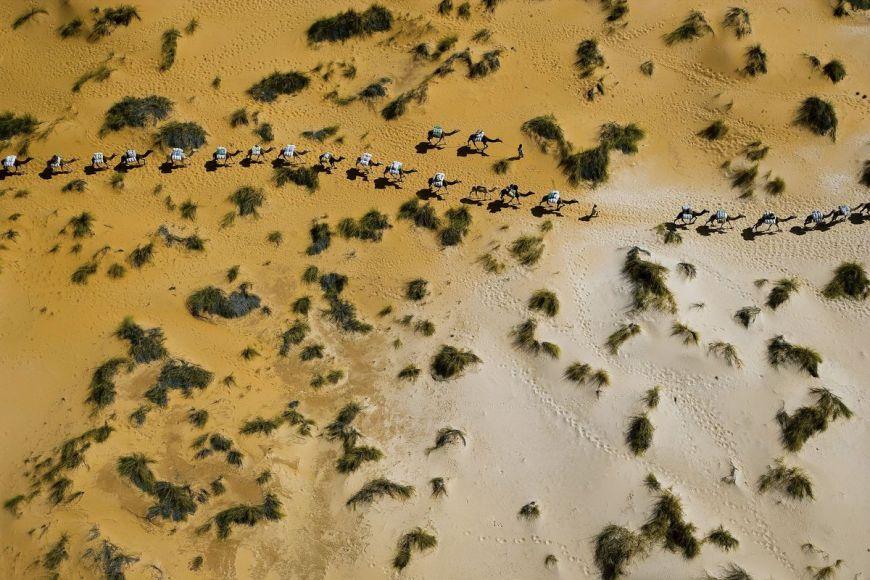 Mauritania, dromedary caravan