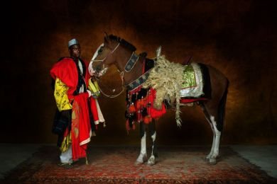 Cheval africain de type barbe
