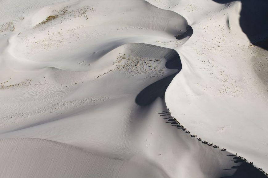Caravane de yaks dans les dunes, Pakistan