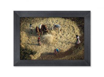 Harvest, Ethiopia