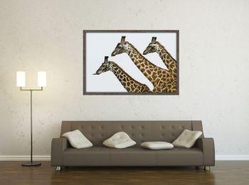 Kenya, girafes dans la réserve du Masai-Mara